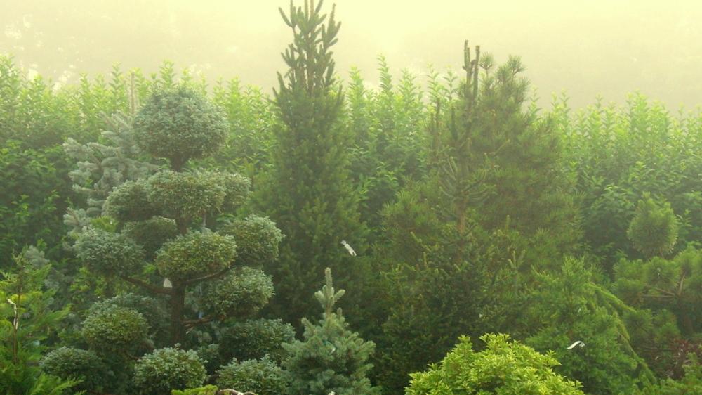 Foggy Choir-001for homepage