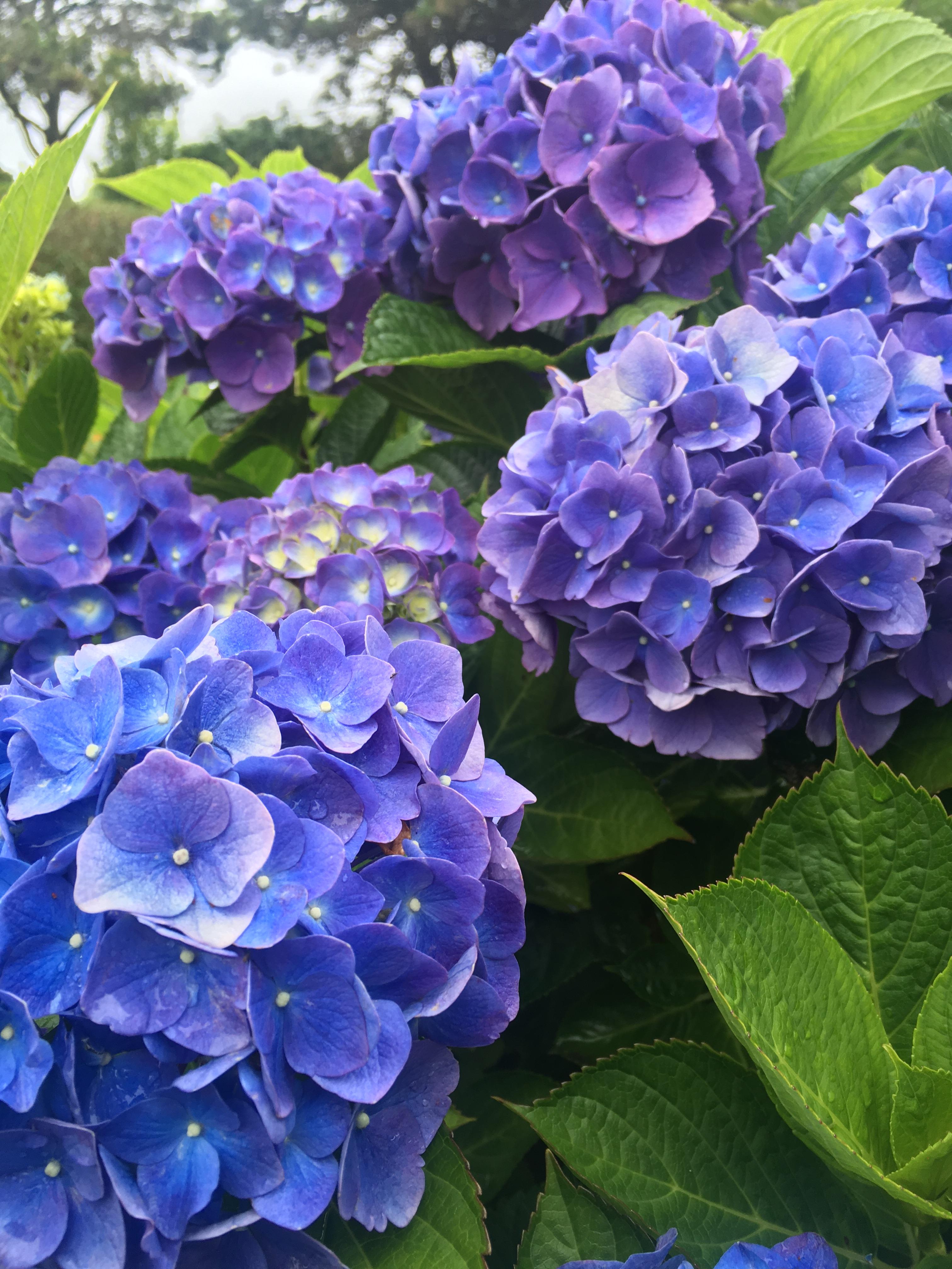 Mathilda Gutges Blue