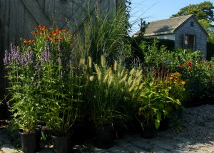 Naturalistic late summer mini garden-1